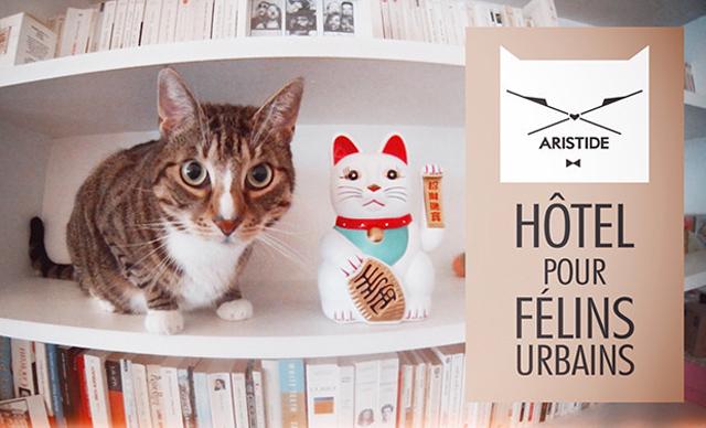 L'hôtel pour chats urbains ouvrira bientôt ses portes !