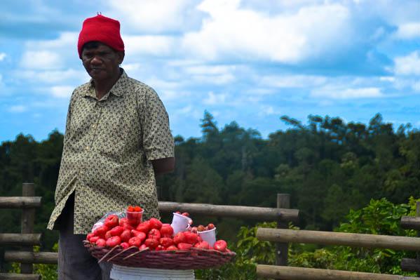 Vendeur de pommes d'amour, les tomates locales