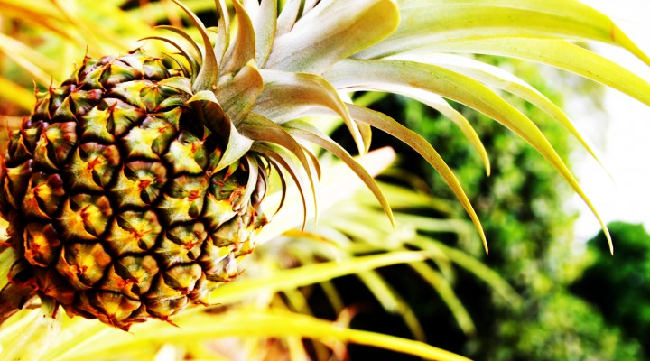 Recette tropicale : Ananas épicé et fromage frais à la cannelle