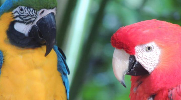 ARGENTINE : escapade aux Chutes d'Iguazu