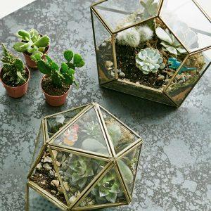 terrarium-boite-verre-metal-asos
