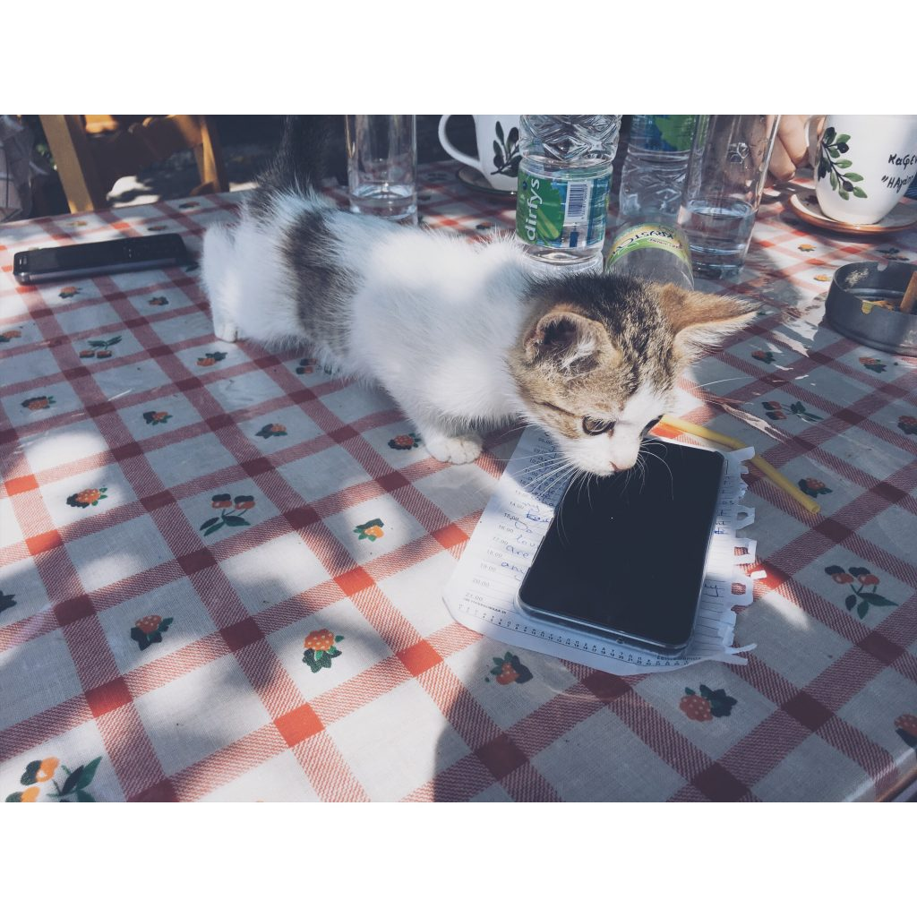 grece-lesvos-chat-chaton-nappe-table