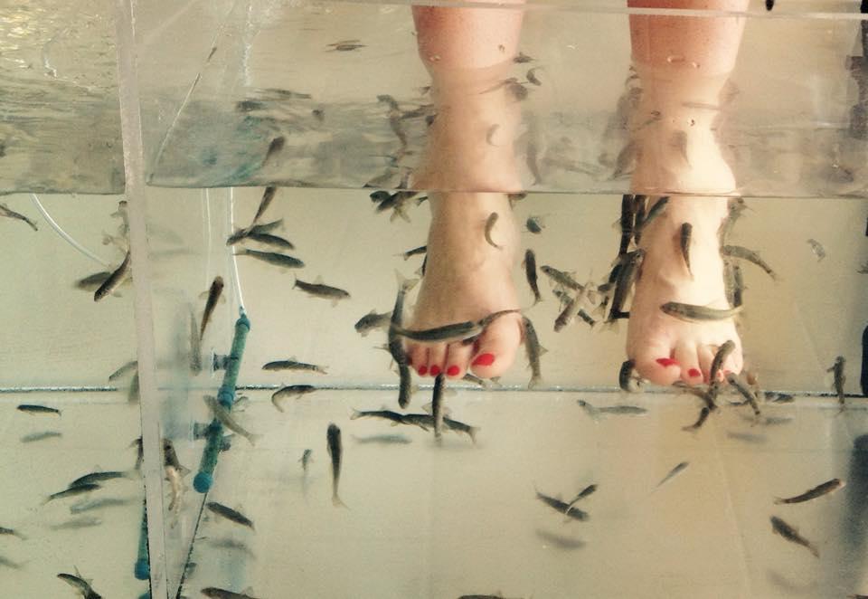 fish-pédicure-malte