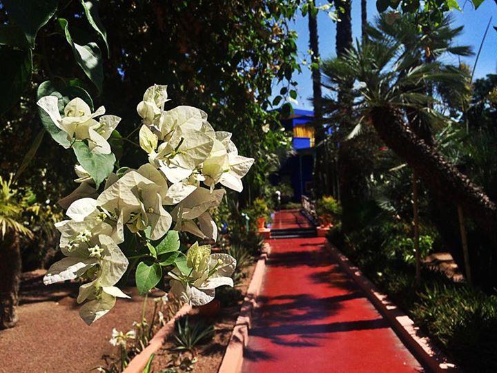 bonnes-adresses-marrakech-jardin-majorelle1