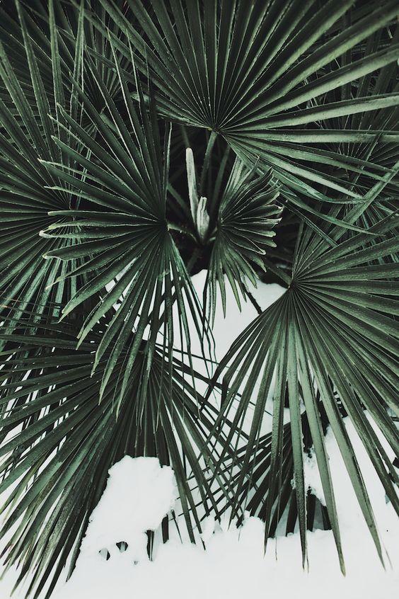 livingo-inspiration-deco-jardin16