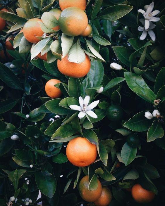 livingo-inspiration-deco-jardin18