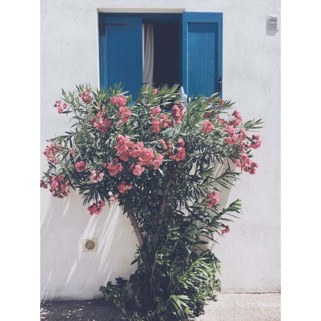 grece-lesvos-fenetre-fleurs-bleu-rose