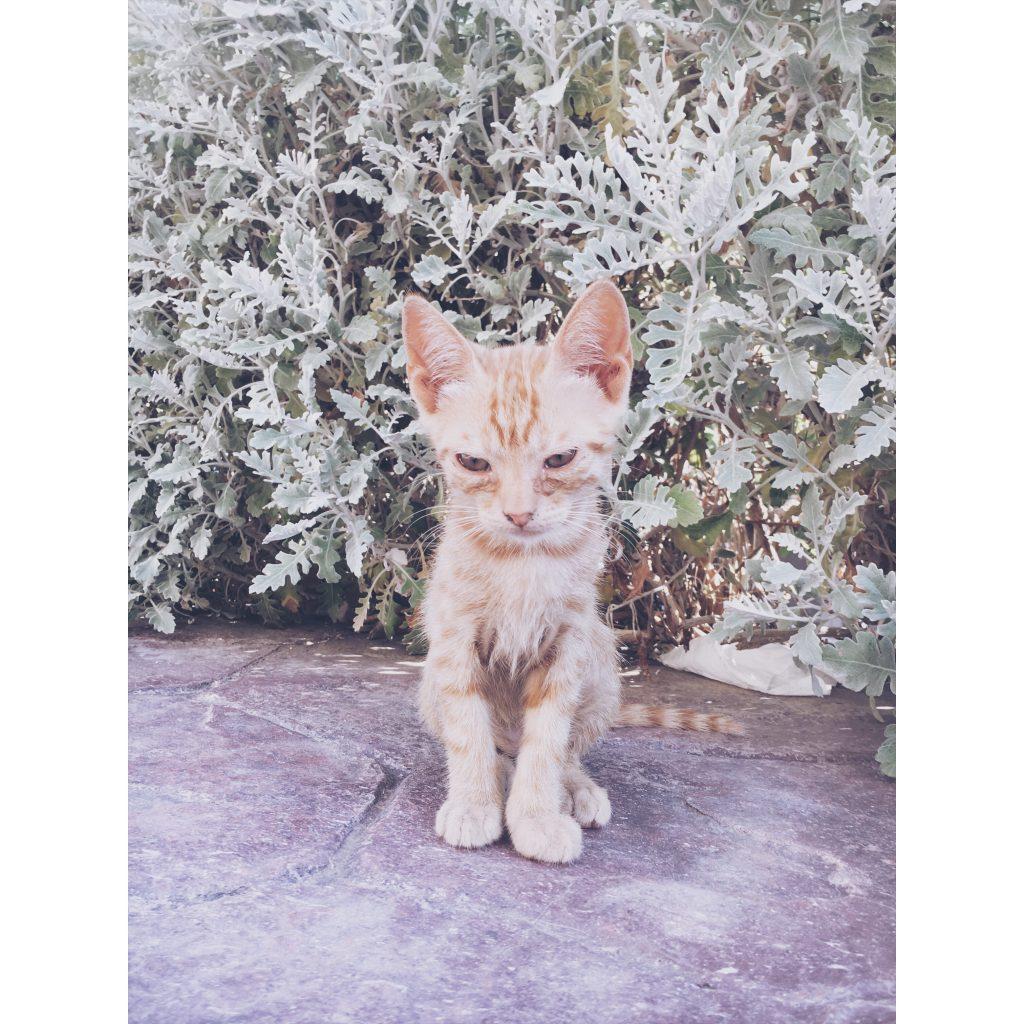 grece-lesvos-chaton-chat-feuilles